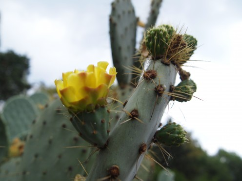 """Yellow Cactus Gem, Tough Frailty"" from the ""Mexican Spring Nature Photography Collection"" by Claudia Tello."