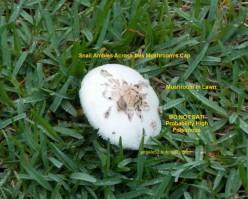 Mushroom Poetry in English Haikus Style