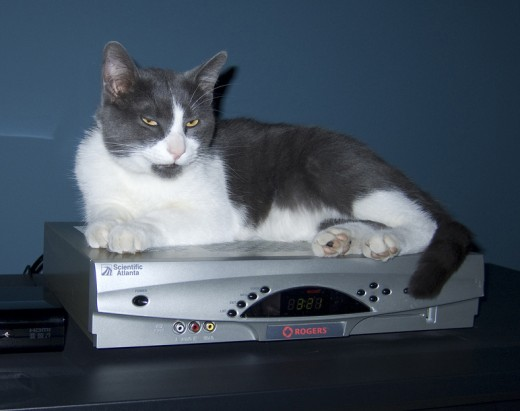 Unplugging your set-top cable box when not in use can save as much as $30 per year in energy costs. If the cat lets you, that is.
