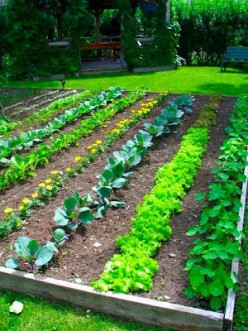 The typical image of a food garden.