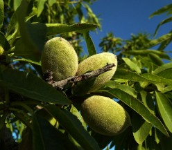Health Benefits of Almonds: Scientific Facts for You