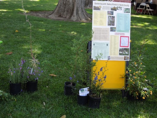 Some of the native plants for sale in the California Native Plant Society exhibit at Festival of the Arts, 2012