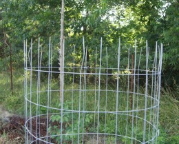 Step 3 (tomato cage shown upside down)
