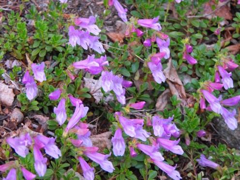 Mountain flowers bring vivid color.