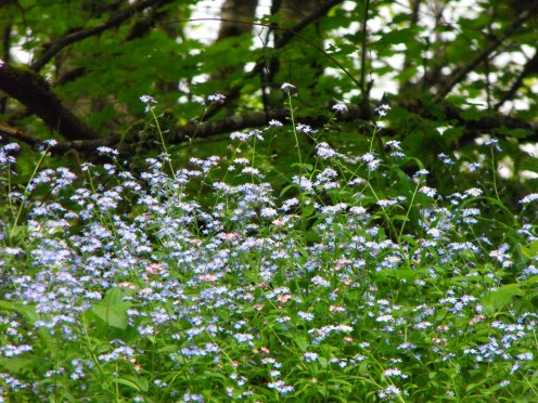 Blue flowers dance in the light breeze as it blows across the lake.