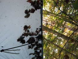Looking skyward from the corner of my tarp on a fall backpacking trip to the Seward Range.