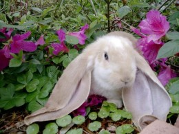 Sweet, sweet nectar!