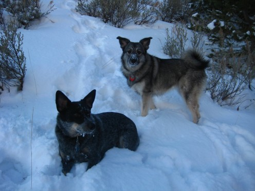 Author's rescue dogs, Blue Heeler mix Molly and Norwegian Elkhound and Lab mix Liebe.