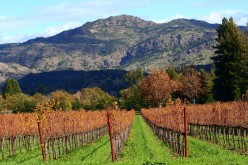 Autumn in the Napa Vally