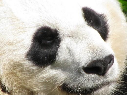 Google Panda was initiated on February 24, 2011.
