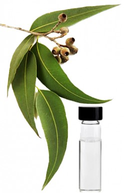 Eucalyptus Oil: How it can help you