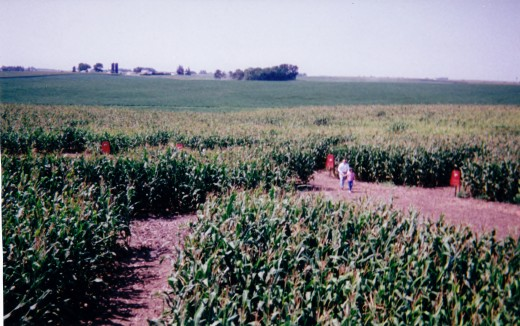 When our grandsons from California came to visit, we took them through this corn maze.