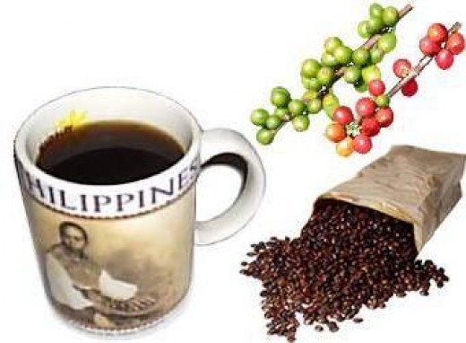 Coffee Barako in the Philippines (from Coffea Liberica variety)