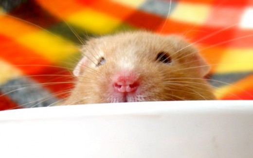 Even a tiny little hamster can be the biggest joy in someone's life.