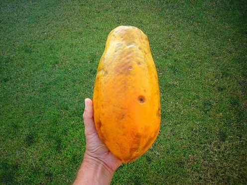 Papaya (whole)