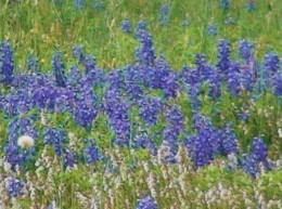 Pick wildflowers.