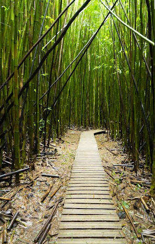 Bamboo forest at lower start point
