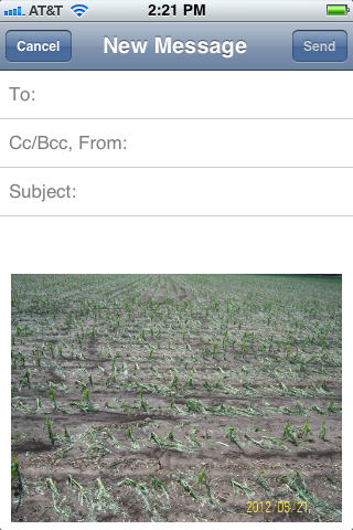 A new email message opens containing the pictures you selected in the body of the message.