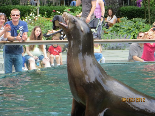 Sea lion barking