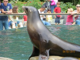 Sea lion checking out his audience.