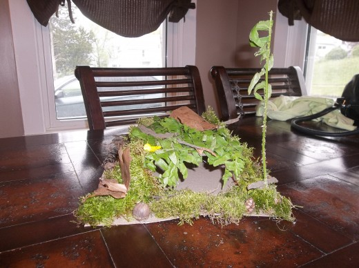 The fairy house we built after a nature walk.