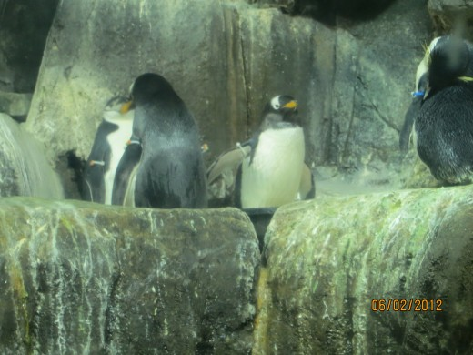 Penguins at Central Park Zoo