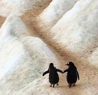 """Be careful, Sister, it's slippery!"""