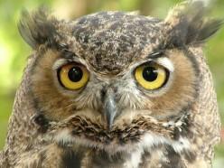Do owls symbolize death?
