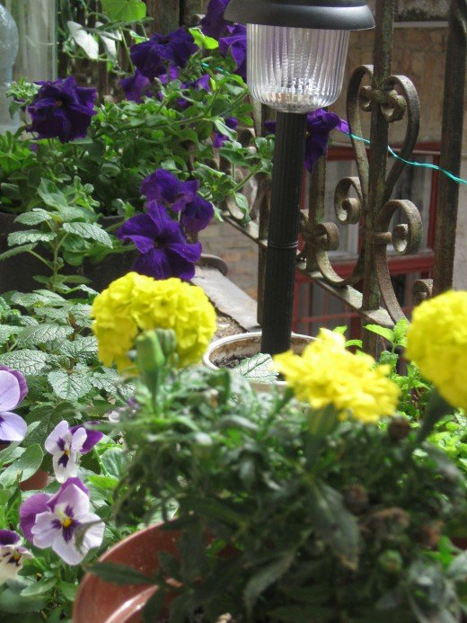 Garden solar light among flowers (French marigold, petunia, pansy )