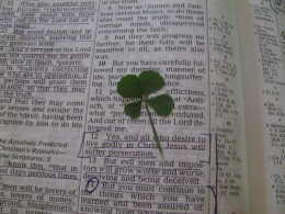 Second four-leaf clover found