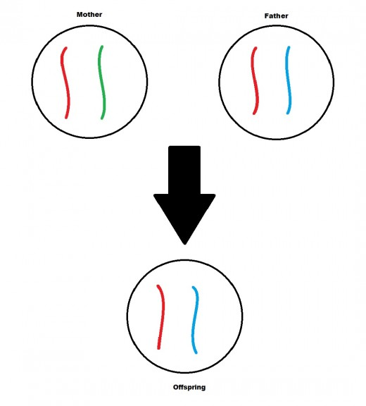 The blue allele was not passed from parent to offspring.