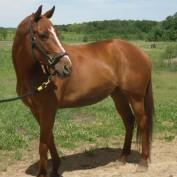 Budget Equestrian profile image