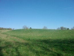 Respective Field