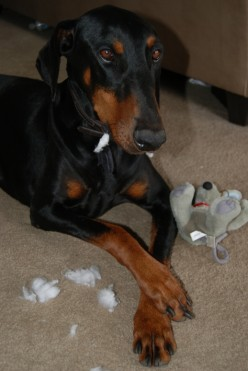 How to stop dog from chewing stuffed animals
