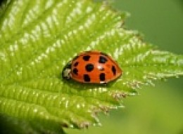 Attract ladybugs by planting a variety of flora in your garden.