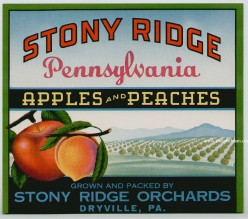 free cross stitch pattern Stony Ridge Peaches