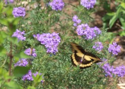 Creating wildlife habitats at your school