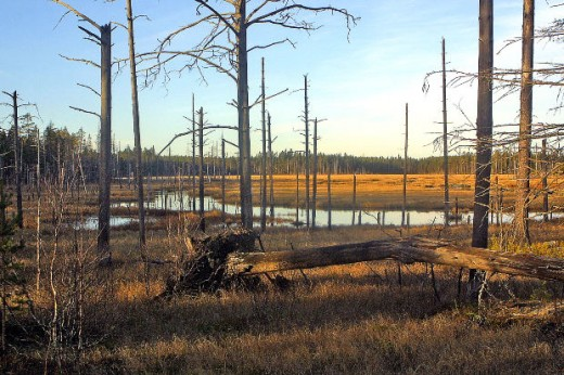 North of the dense swamps of Tate's Hell, were grasslands, wetlands, and pine forests.