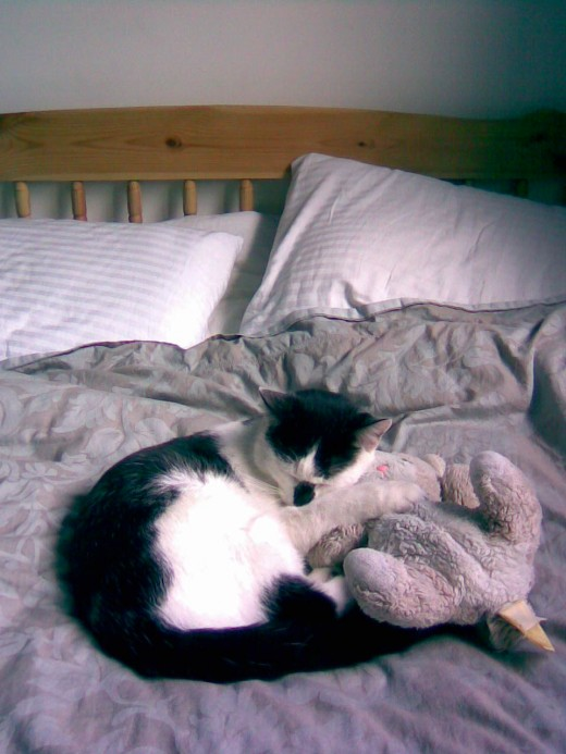 Cats know how to relax! This is my cat, Charlie cuddled up with his favorite toy cat!