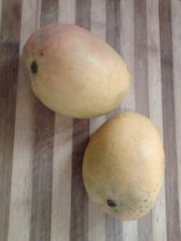 Fresh ripe mangoes, Alphonso variety