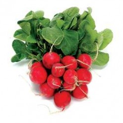 How do I grow radishes large?