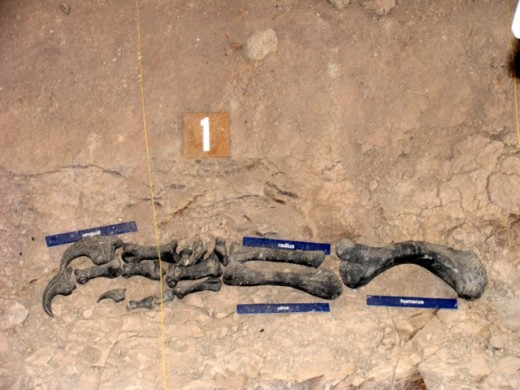 Bones in place Cleveland-Lloyd Dinosaur Quarry