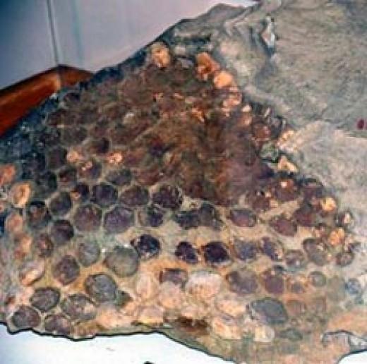 Fossilized Stegasaurus skin