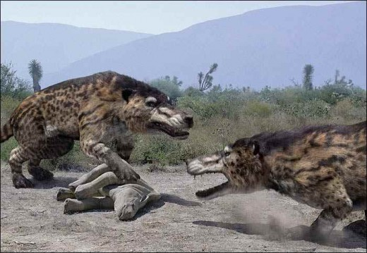 pictures are estimated since only a skull was found. The Andrewsarcus roamed what is now current day gobi desert in mongolia. It has been dubbed the largest land-dwelling carnivorous mammal known.