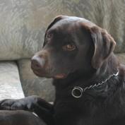 cherylvanhoorn profile image