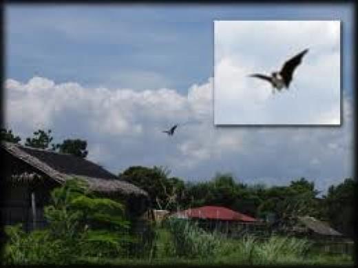 Aswang in flight