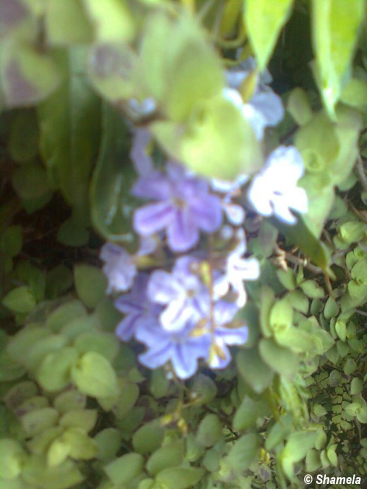 My photo of The purple flowers in my poem.