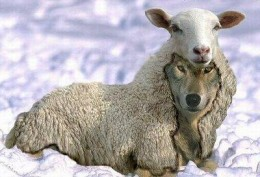 Are We Not All Wolves in Sheep Clothing?