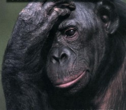 The Human Difference: Chimpanzees and Bonobos - Men and Women
