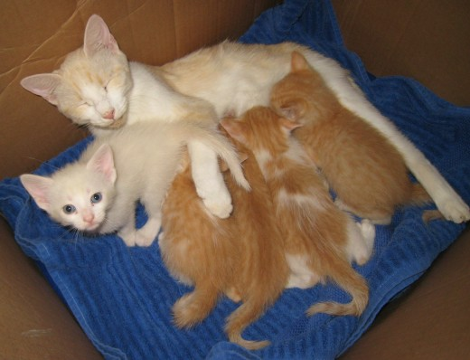 Peaches-n-Cream with her delectable little kittens